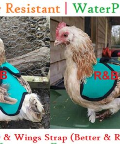 Chicken Saddle Apron Hen protector Adjustable Waterproof w snaps POULET WING PROTECTION Canvas Bantam Small Medium Large Cockerel Cotton